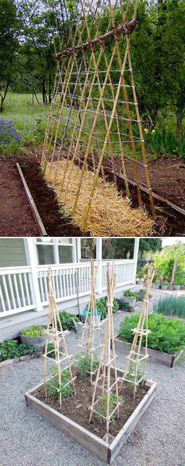Bamboo Tomato Cage | Stunning Bamboo Craft Projects | FarmFoodFamily.com