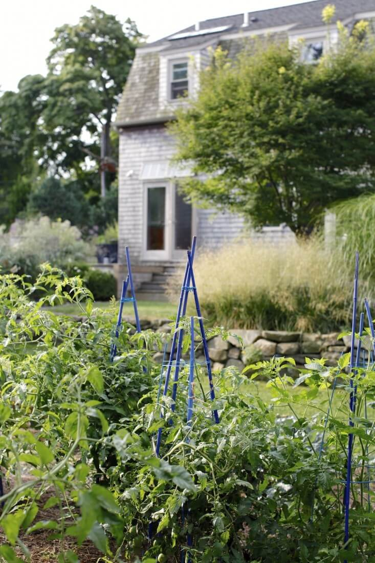 Rhode Island garden's occasional flashes of color | Edging Plants for Kitchen Gardens - FarmFoodFamily.com
