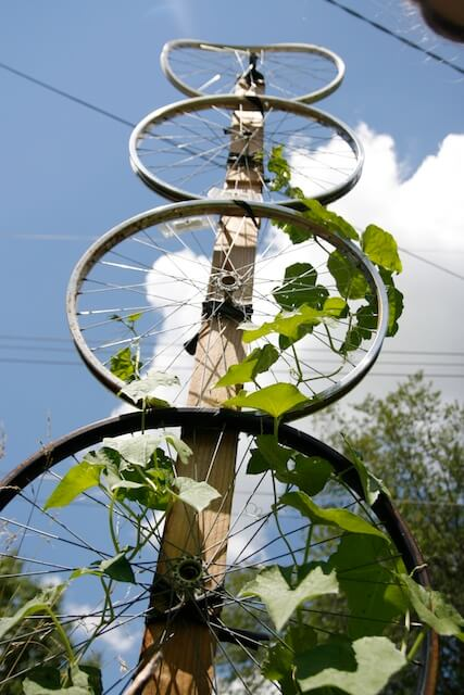Bike Wheel Trellis | Up-cycled Trellis Ideas For Garden