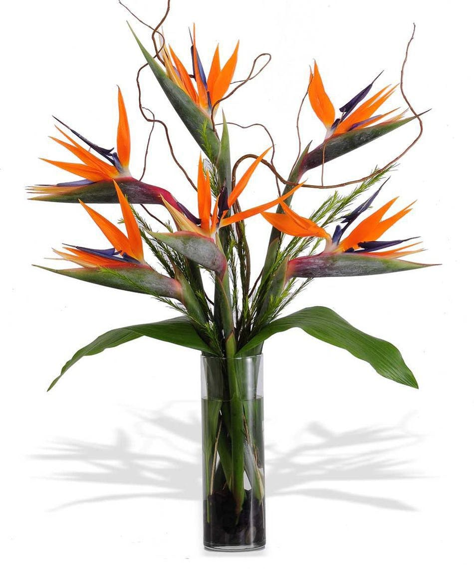 Growing Bird of Paradise in Pots