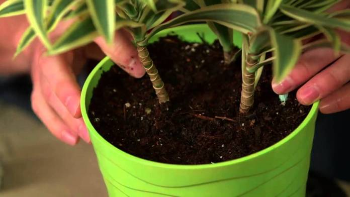 Fertilizing Indoor Plants