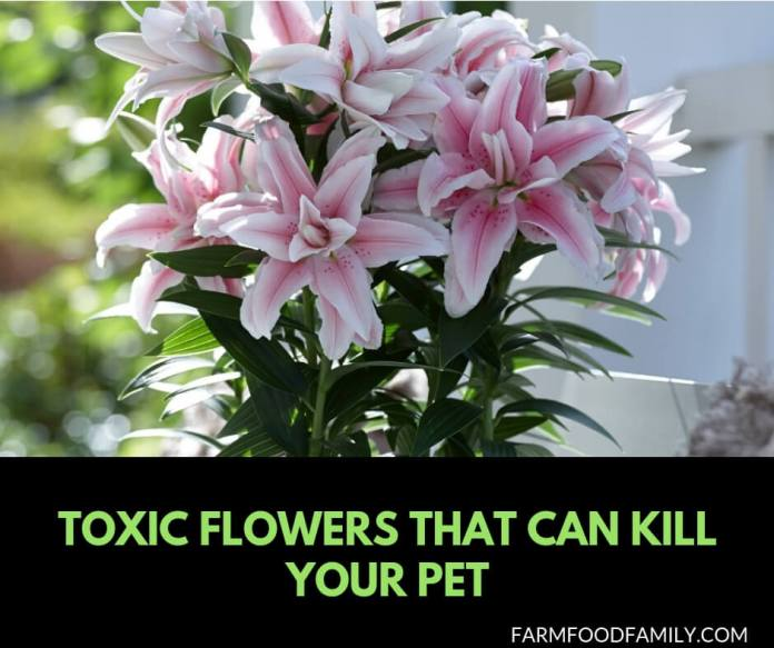 19+ Poisonous plants to dogs and cats