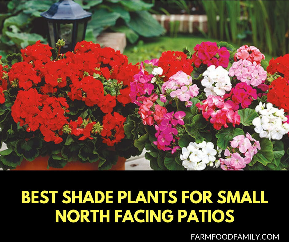 5 Best Shade Plants for Small North Facing Patios
