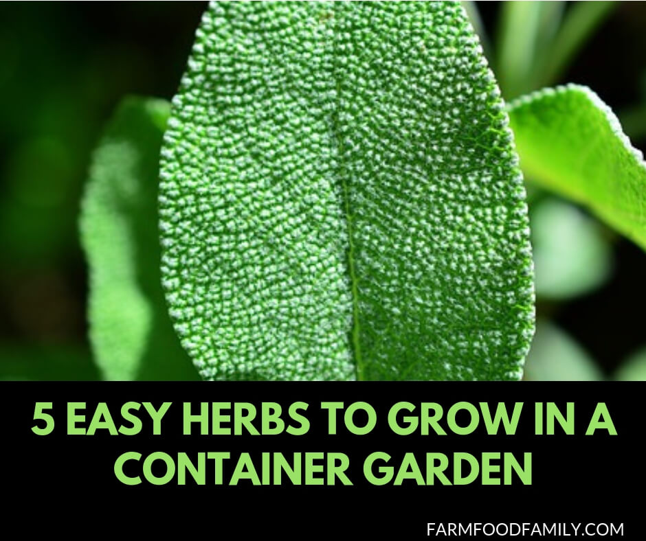 5 easy herbs to grow in a container garden hassle free - Easiest herbs to grow indoors ...