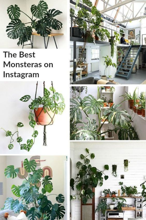Houseplant Inspiration