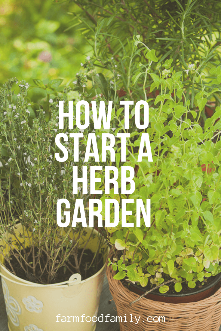 How to start a herb garden