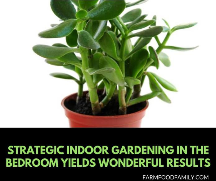 Put Some Spring in Your Sleep: Strategic Indoor Gardening in the Bedroom Yields Wonderful Results