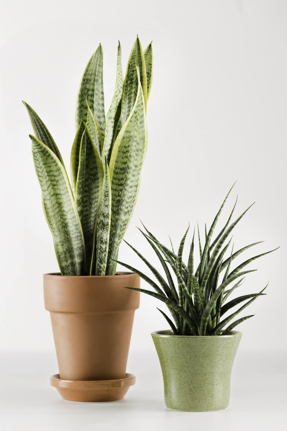 Mother in law's tongue: Breathe Easy with an Indoor Garden: Improve the Air Quality and Charm of Your Home with Houseplants