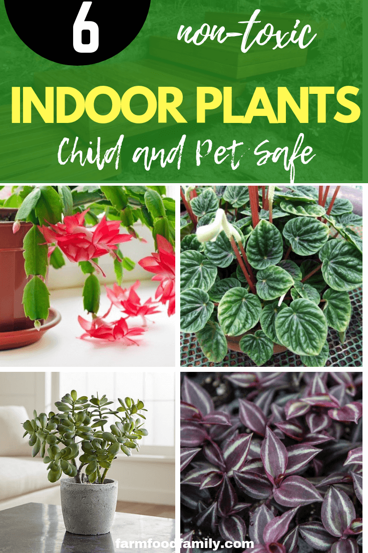 Child and Pet Safe Houseplants: Non-Toxic Indoor Plants