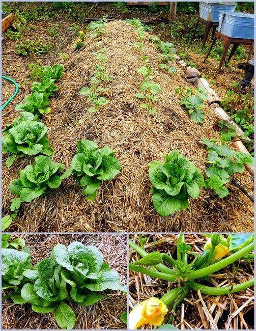 Hugelkultur Raised Garden Bed Start to Finish | How to Build a Raised Vegetable Garden Bed | 39+ Simple & Cheap Raised Vegetable Garden Bed Ideas - farmfoodfamily.com