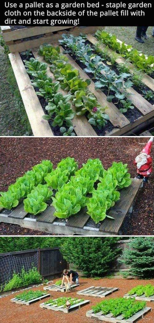 DIY Pallet garden | How to Build a Raised Vegetable Garden Bed | 39+ Simple & Cheap Raised Vegetable Garden Bed Ideas - farmfoodfamily.com