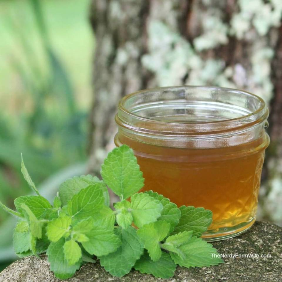Making Lemon Balm Oil Infusions and Uses