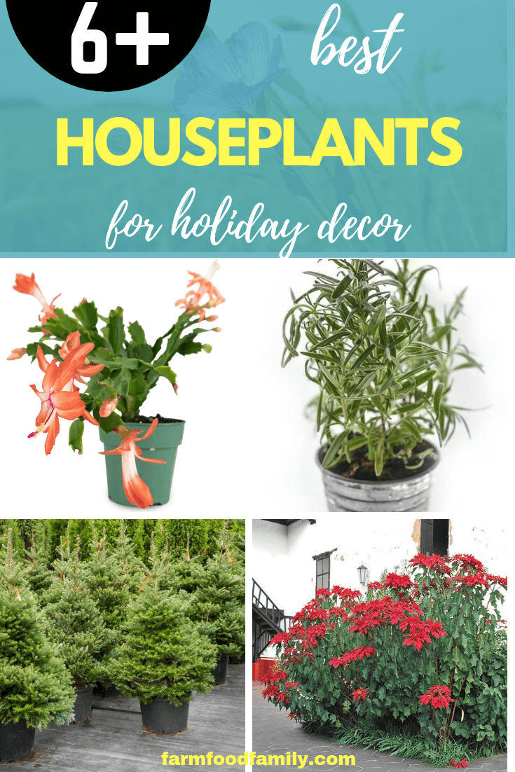 6 Best Houseplants for Holiday Decor