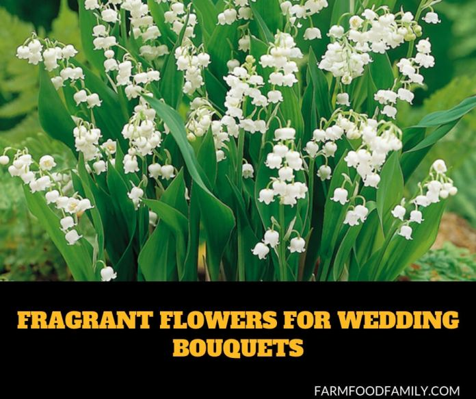 Fragrant Flowers For Wedding Bouquets