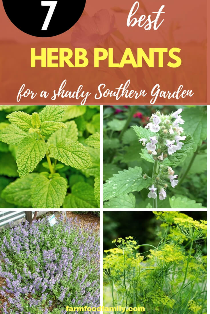 Easy to Grow Herbs for a Shady Southern Herb Garden