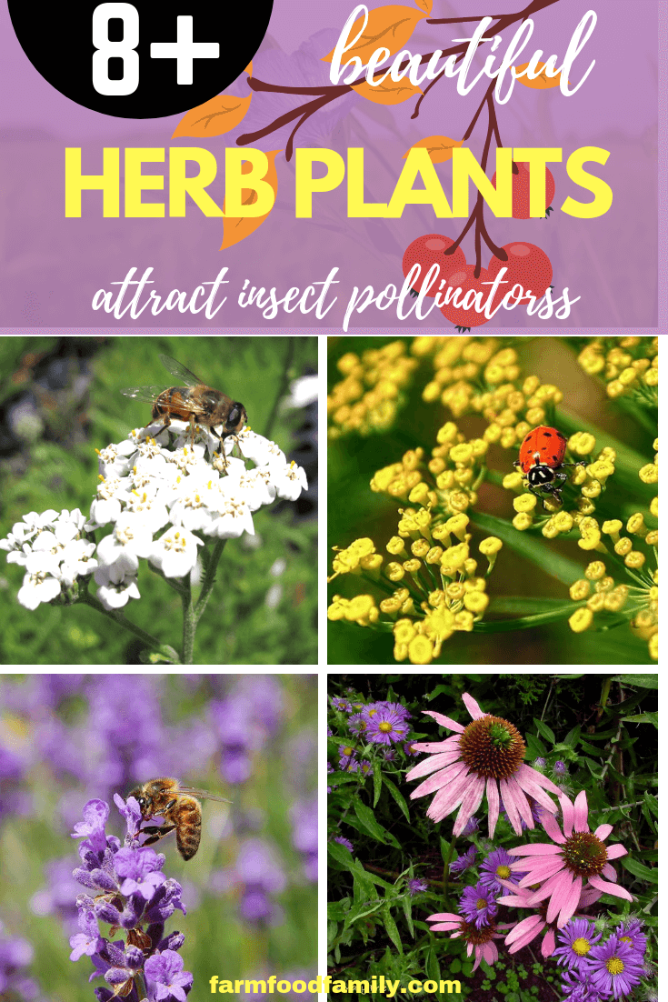 How to attract butterflies to garden: Herb Gardening with a View Toward Attracting Insect Pollinators