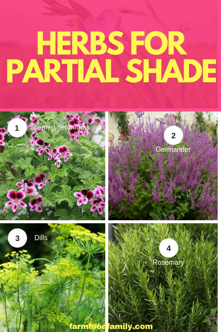 Herbs for Partial Shade