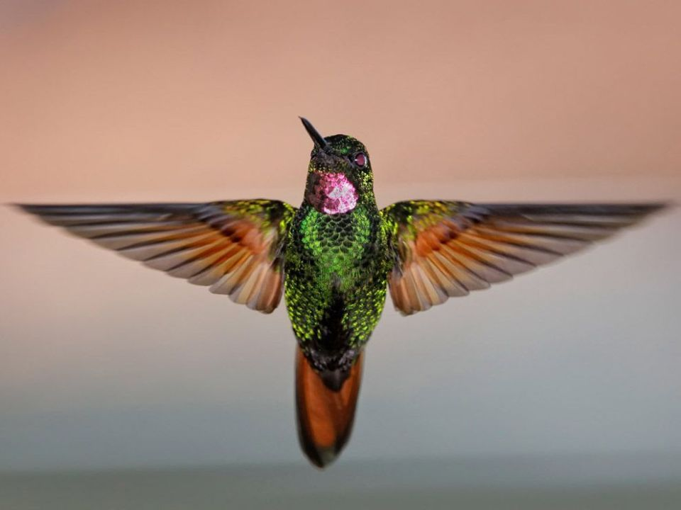 How do Hummingbirds survive in winter