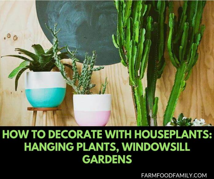 How To Decorate With Houseplants: Hanging Plants, Windowsill Gardens, and Other Decorating Ideas