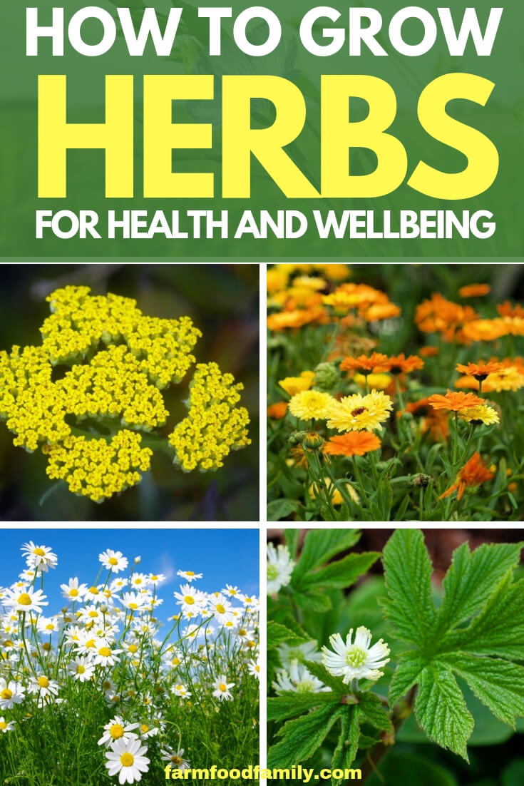 Healing herbs: how to grow herbs for health and wellbeing