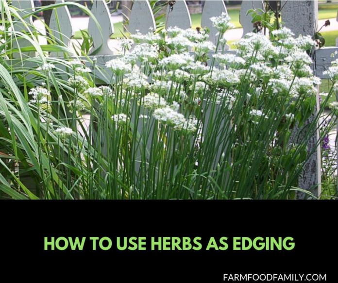 How to use herbs as edging