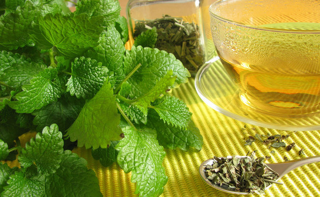 Lemon Balm Uses in Tea and Cooking