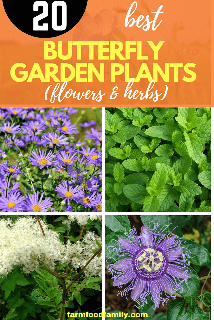 20 Best Flowers & Herbs That Attract Butterflies