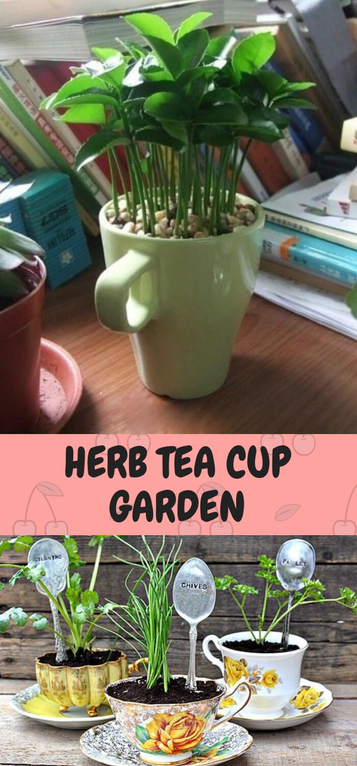 Herb Tea pot