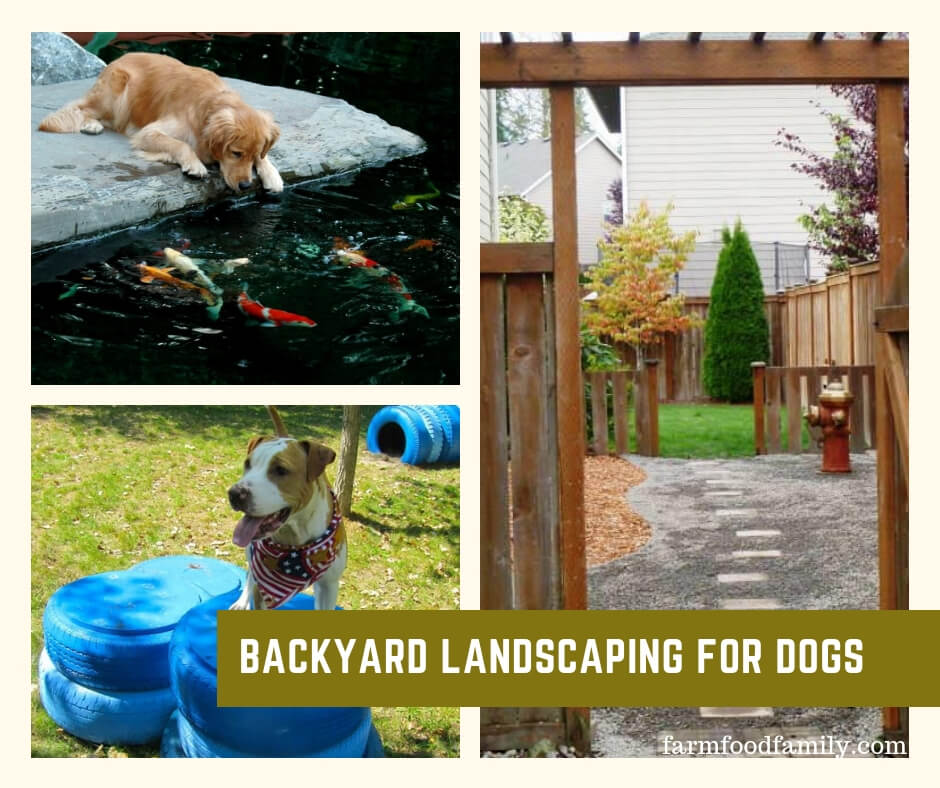 10+ Great Dog-Friendly Landscaping Ideas