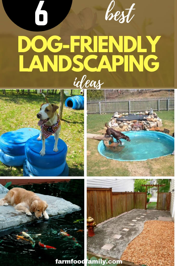 Landscaping Ideas for dogs