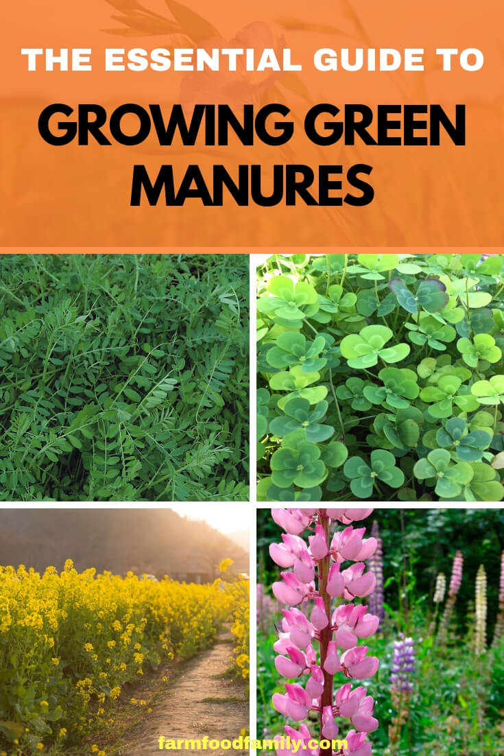 The Essential Guide to Growing Green Manures