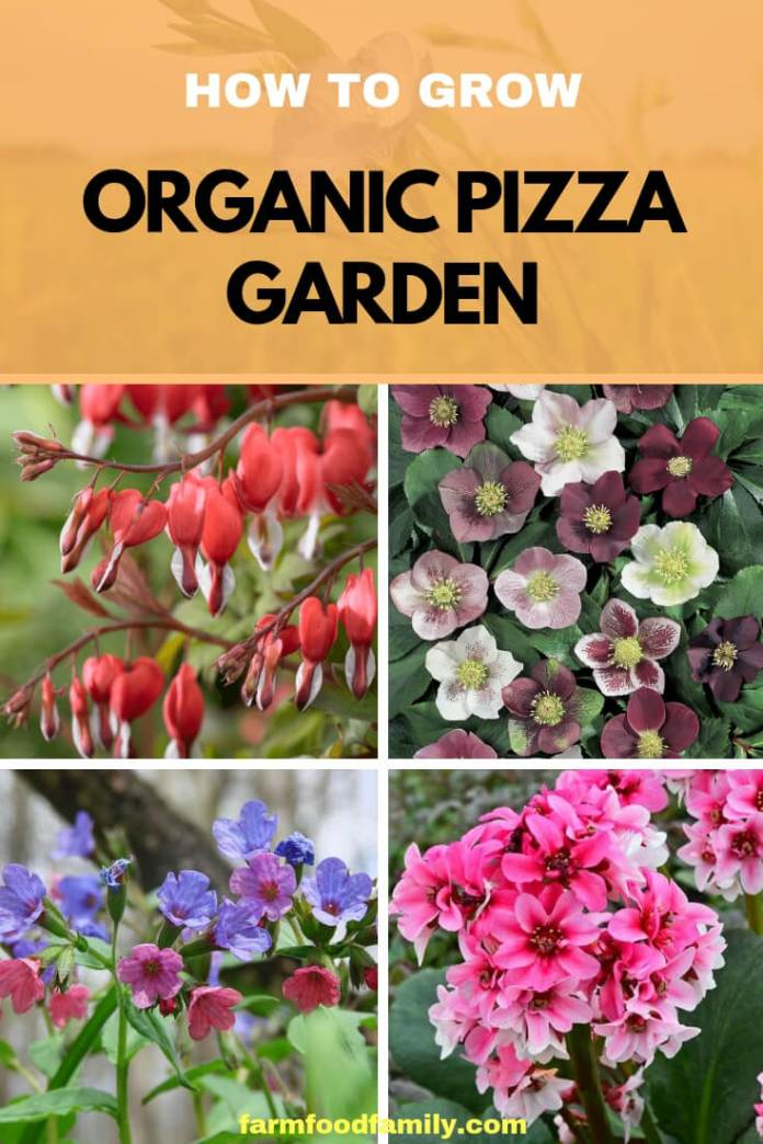 A pizza garden is a good theme garden for beginners, children, or anyone who loves pizza. Filled with fresh organic vegetables and herbs, this garden will produce all summer long.