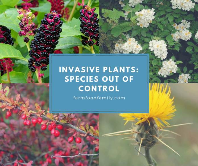 Invasive Plants: Species Out of Control