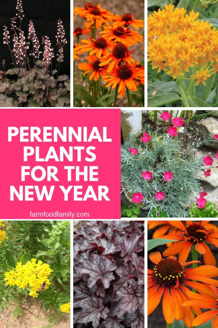 Perennial Plants for the New Year