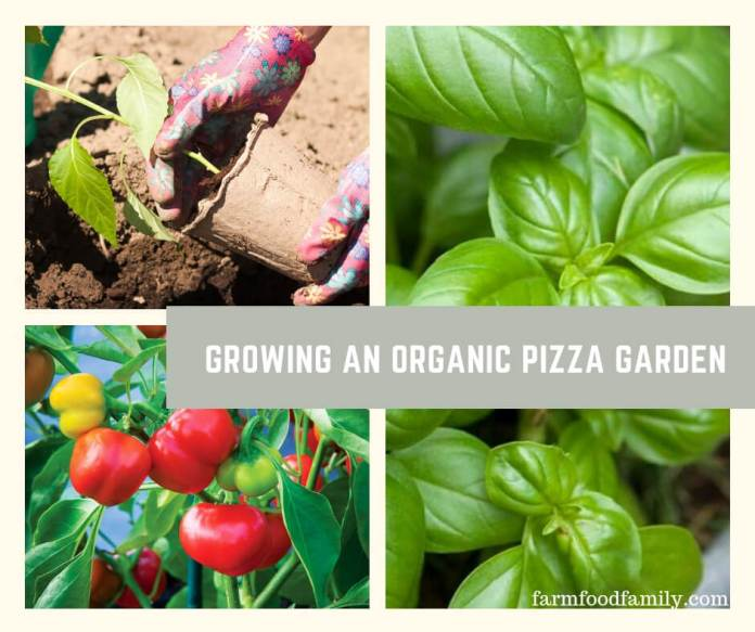 Grow an Organic Pizza Garden