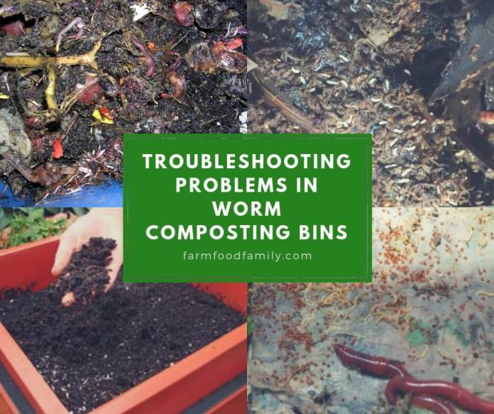 Troubleshooting Problems in Worm Composting Bins