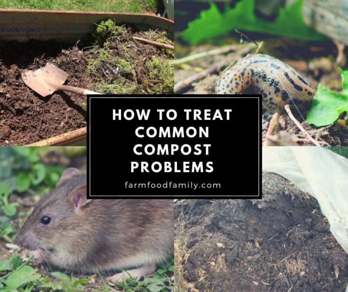 How to Treat Common Compost Problems