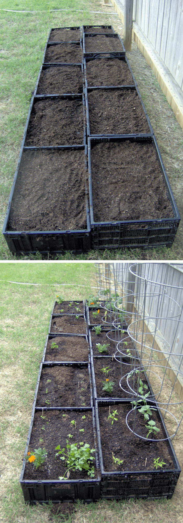 Square food garden with plastic crates