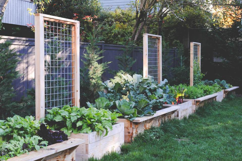 Cedar Raised Beds with Permanent Trellising