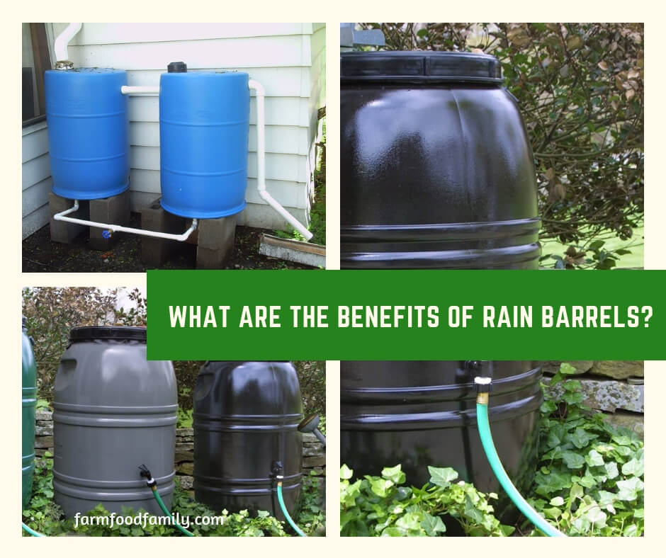 What are the Benefits of Rain Barrels?