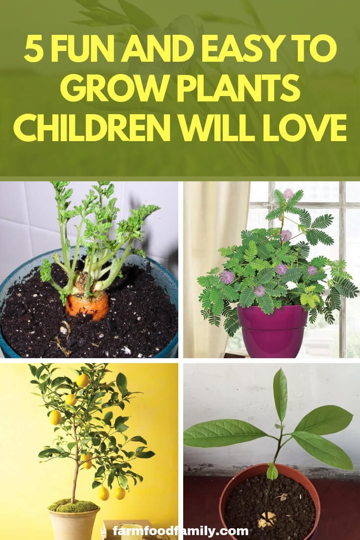 5 Fun and Easy to Grow Plants Children Will Love