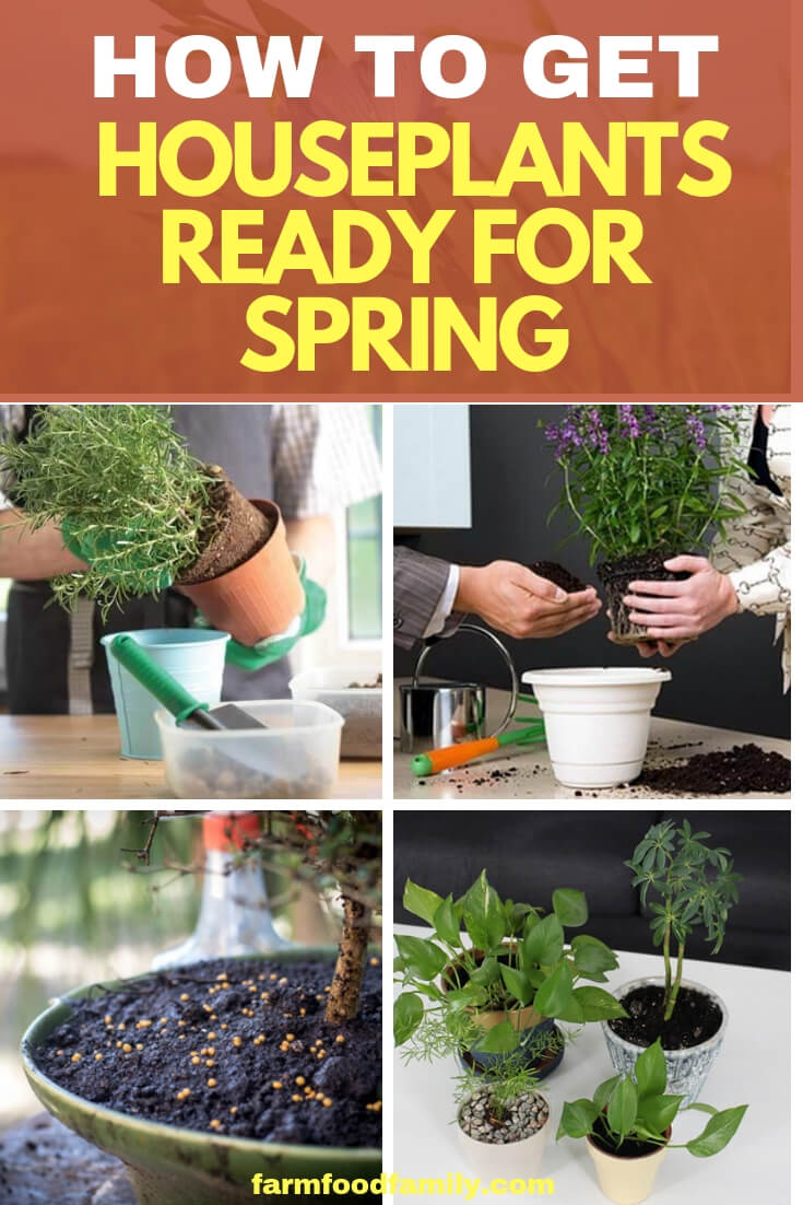 The days are getting longer and warmer, and that means it's time for houseplants to come out of dormancy and begin putting forth lots of new growth. To help them look their best, here's a spring maintenance list