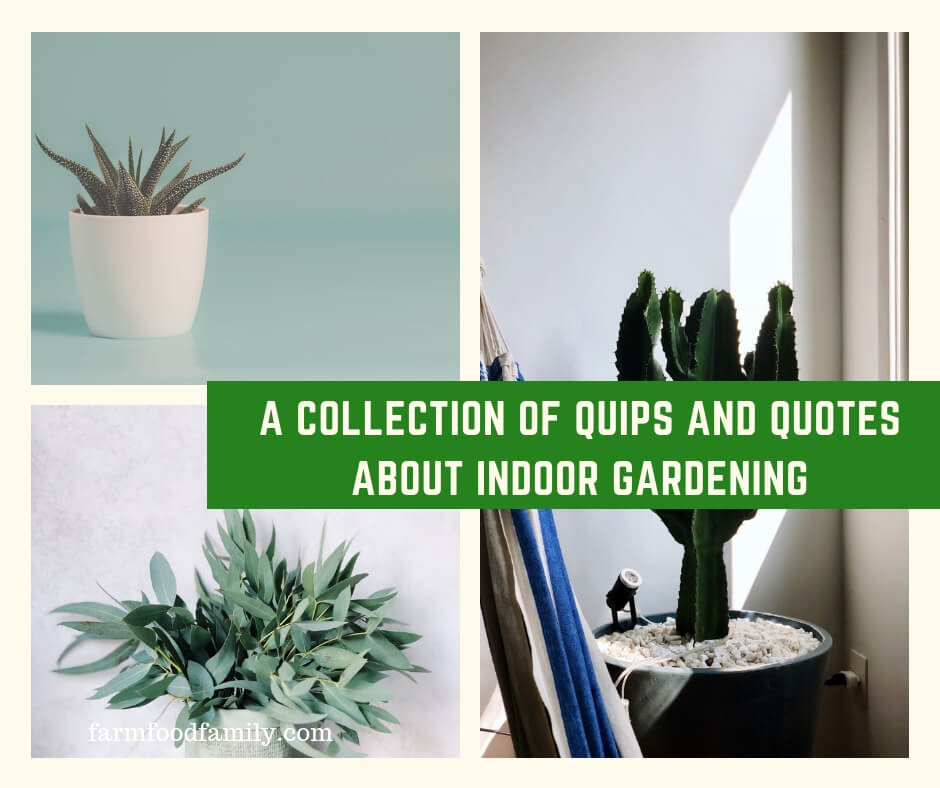 16 Quotes For Houseplant Lovers Indoor Gardening
