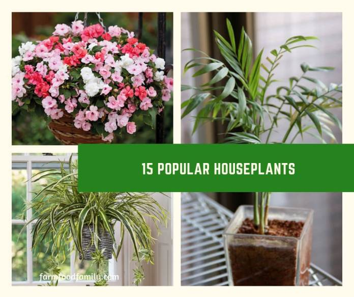 House plants are varied and very broad. Most can be categorized as flowering and non flowering.While we commonly assume house plants are few in numbers, the truth is there are hundreds of varieties of house plants.