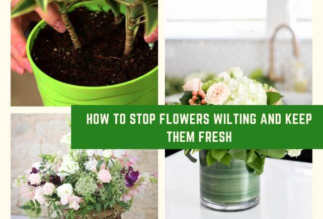 How to Stop Flowers Wilting and Keep Them Fresh