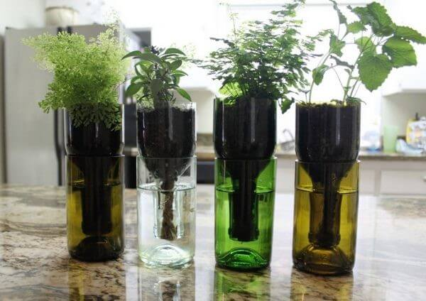 Wine Bottle Planters | Best DIY Self-Watering System Ideas