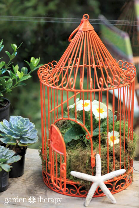 Bird Cage Planters from the blue greenhouse