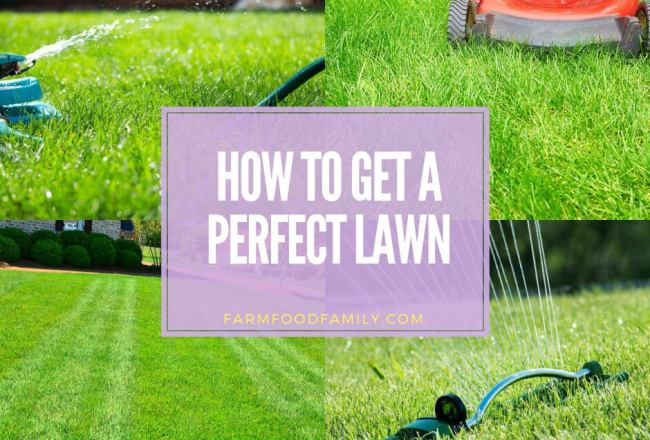 How to Get a Perfect Lawn