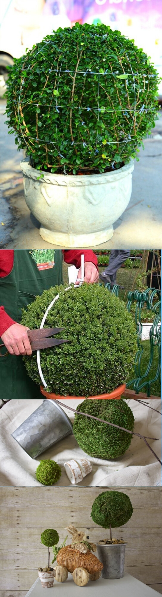 DIY Topiary | Best DIY Garden Globe Ideas & Designs