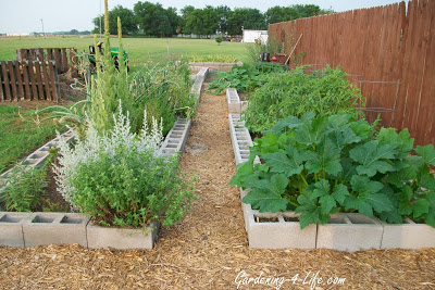 Cinder block raised beds for herb garden